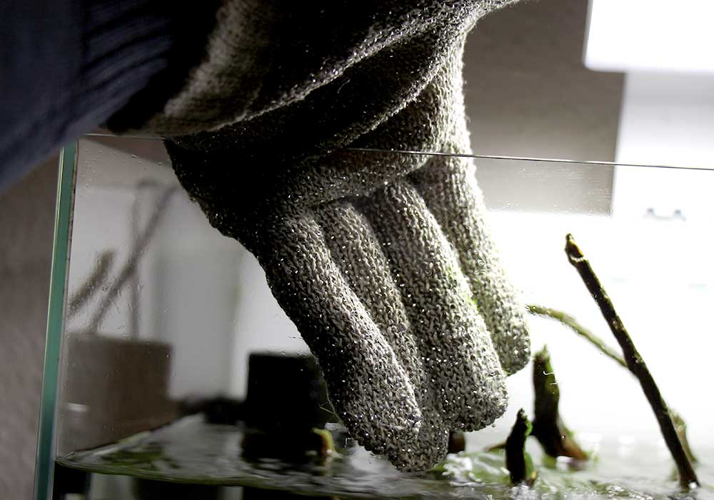 Algen an der Scheibe mit Scheibenreiniger entfernen 2
