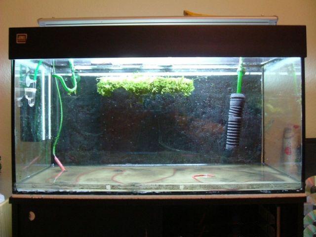 Bodenfluter zum Aquarium heizen
