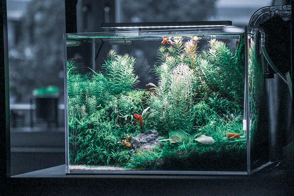 Nano Aquarium heizen