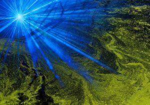 Entstehen Algen durch das Mondlicht im Aquarium?