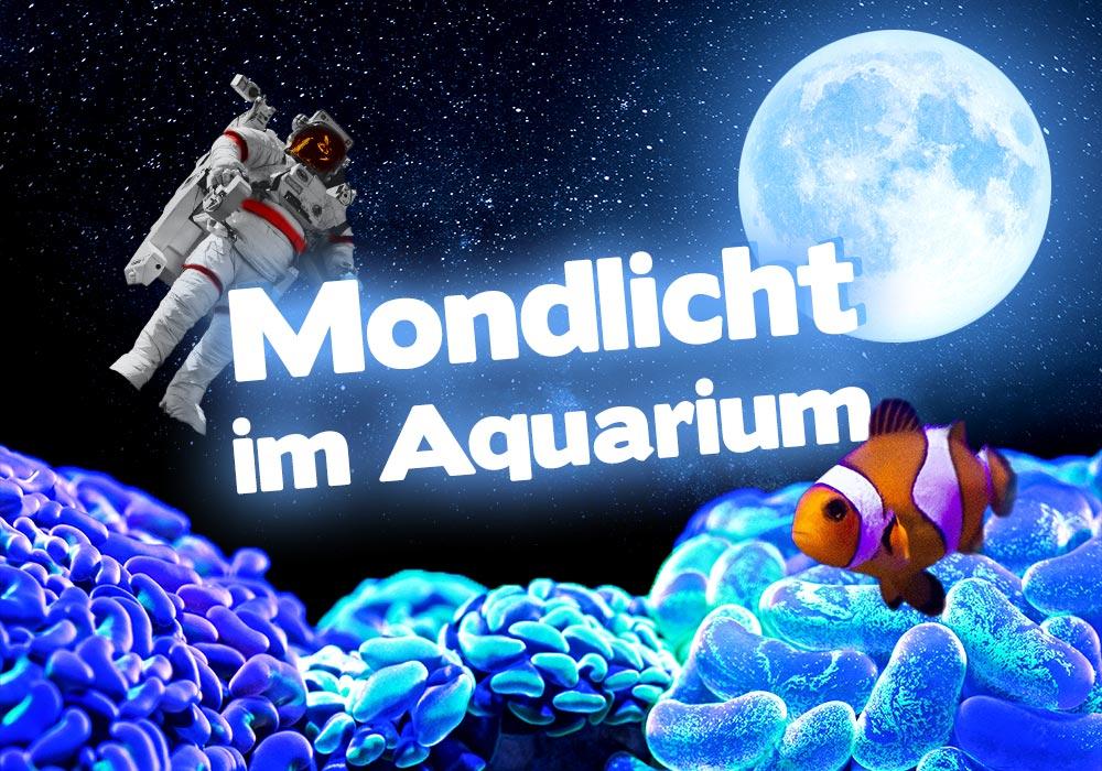Mondlicht im Aquarium