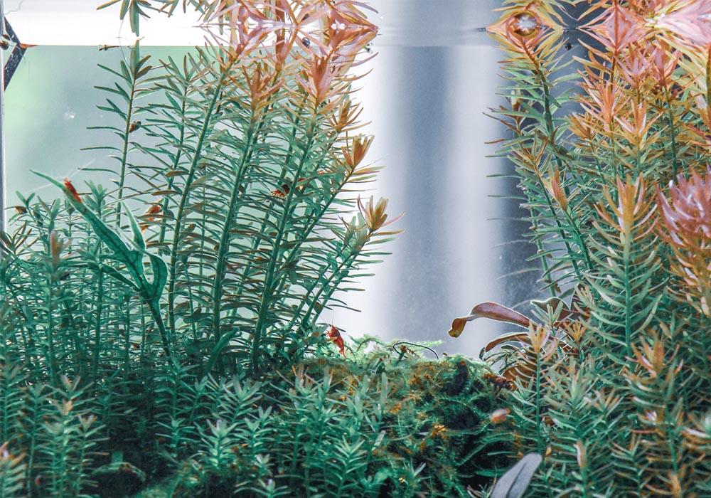 Das richtige Wasser Garnelen im Aquarium