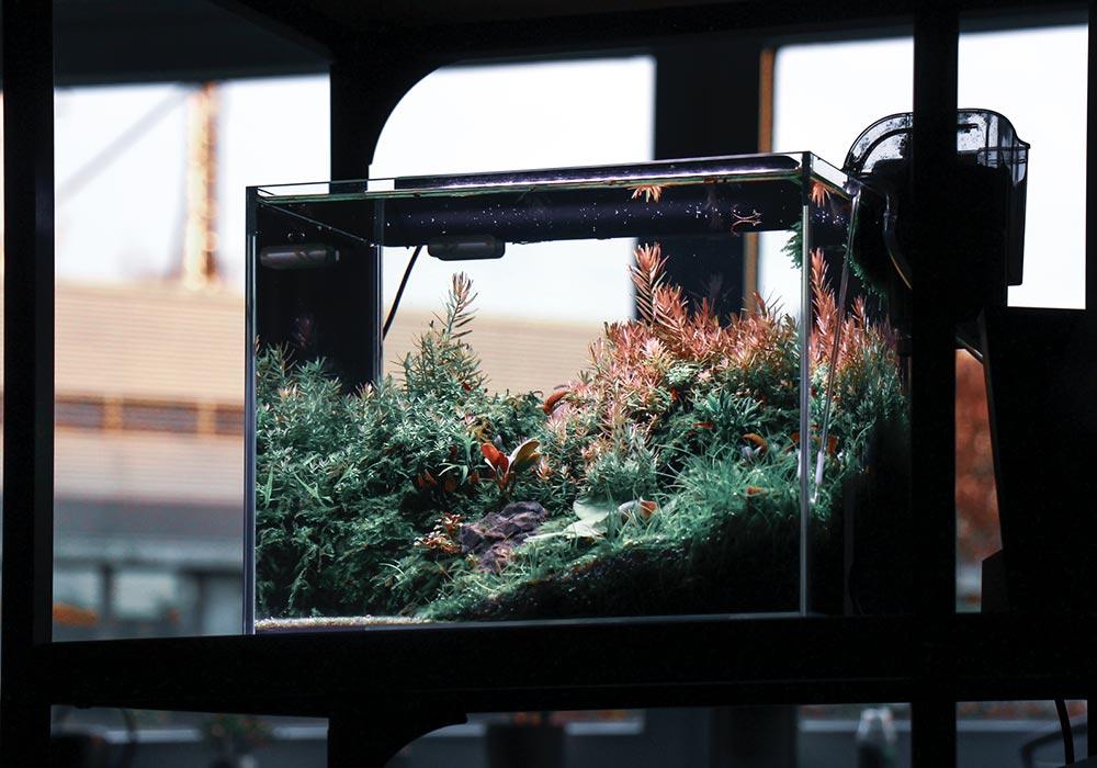 Ein passendes Aquarium für Zwerggarnelen