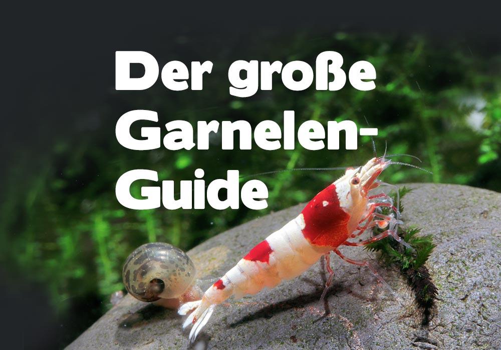 Garnelen im Aquarium: Der ultimative Guide für Garnelenaquarien!🦐 2