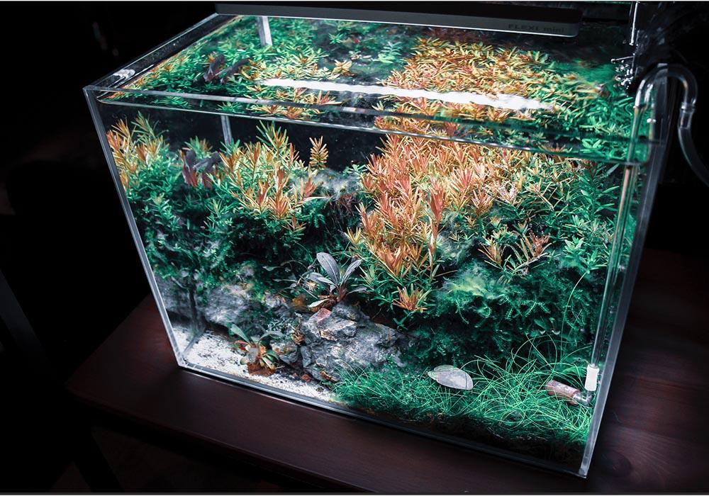 Pflanzen und Aquariendekoration im Garnelenaquarium