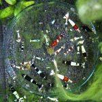 Wie viele Garnelen in einem Aquarium?