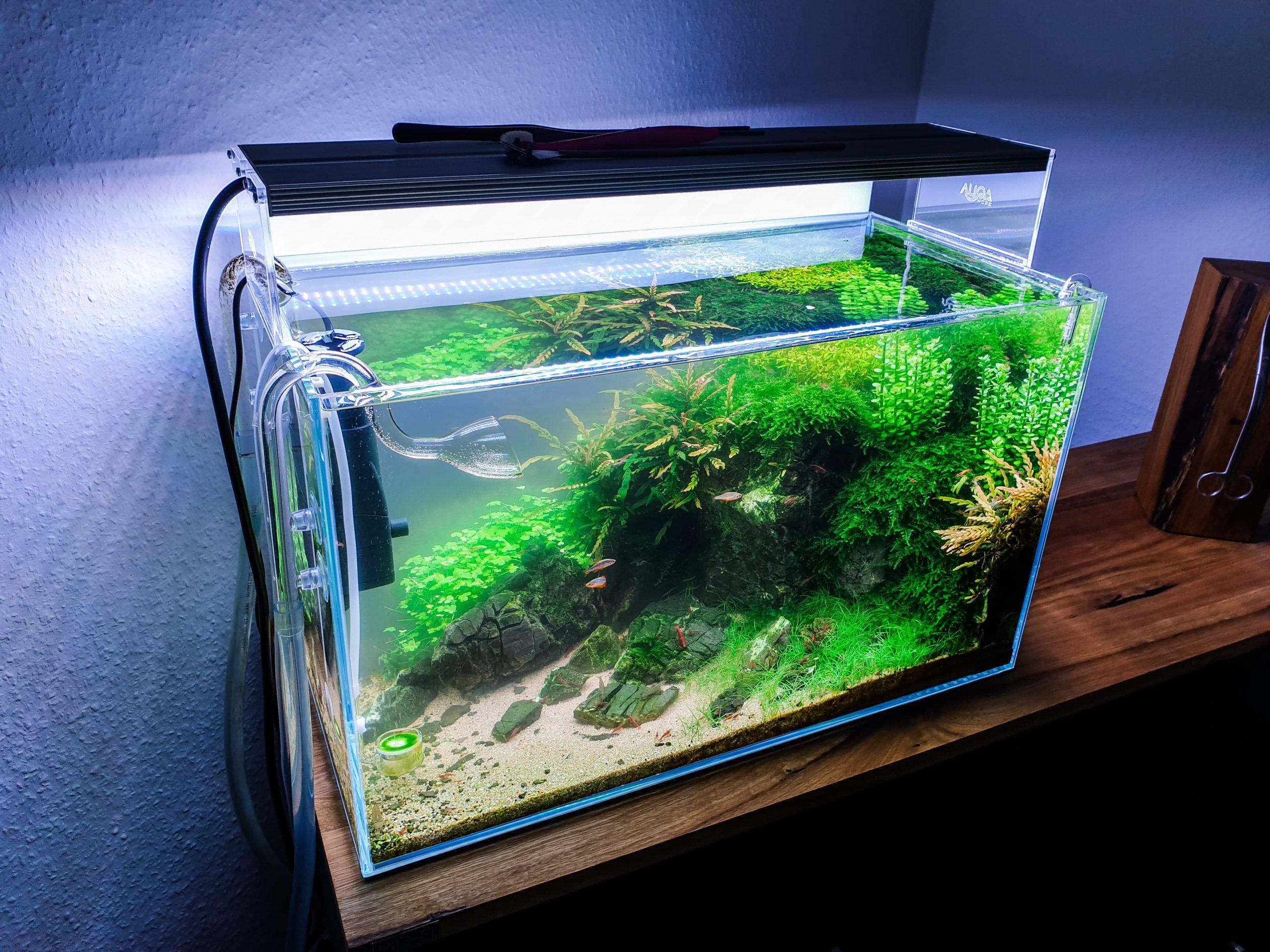 Endlich wieder klares Wasser im Aquarium