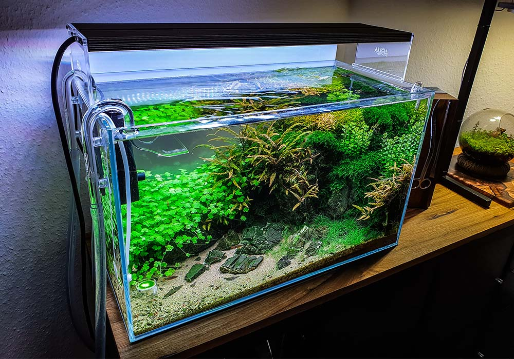 Klares Wasser im Aquarium