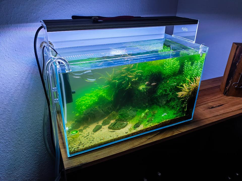 Milchig grüne Trübung im Aquarium entfernen