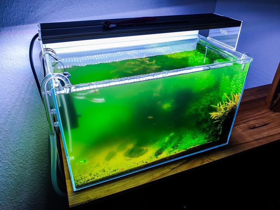 Trübes Wasser im Aquarium beseitigen