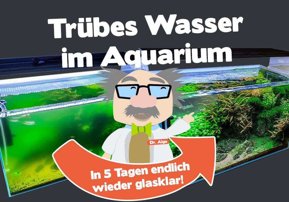 Trübes Wasser im Aquarium: was tun?