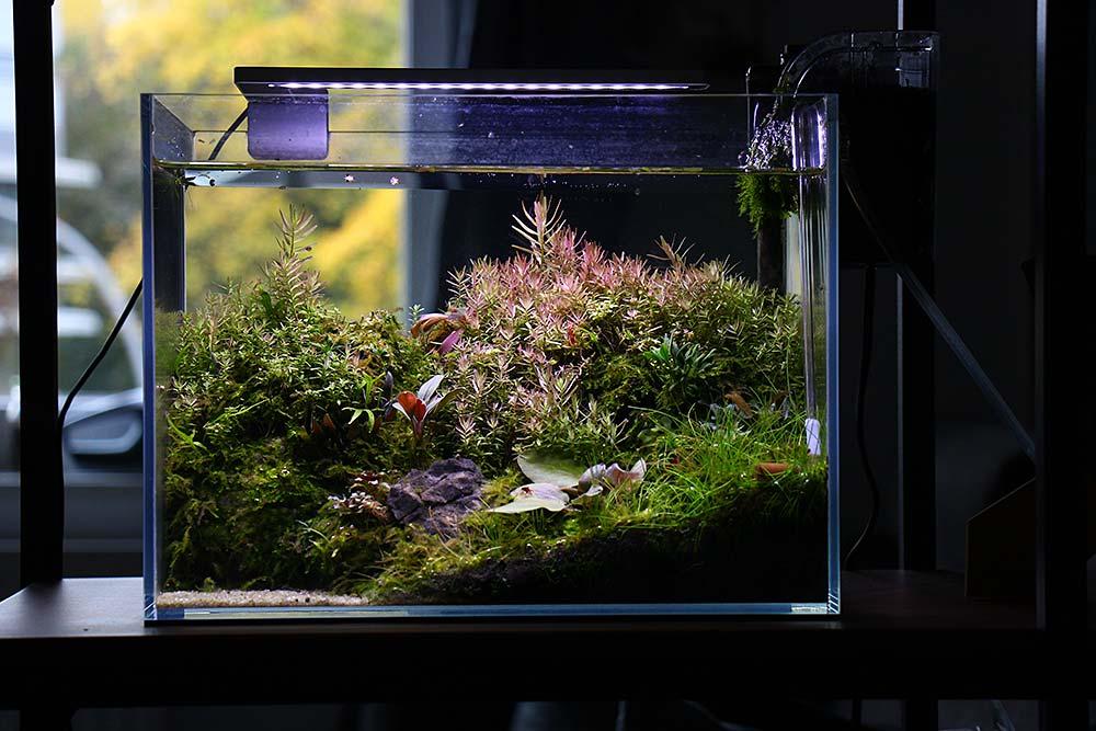 Warum CO2 im Aquarium?