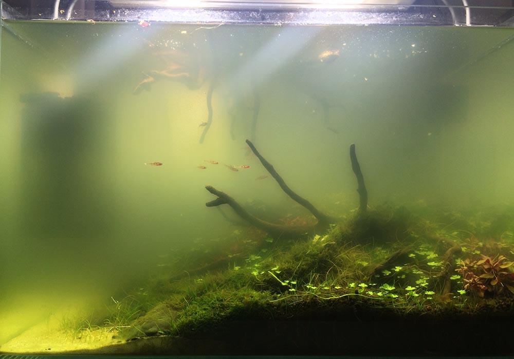 Was tun, wenn das Wasser im Aquarium trüb ist?