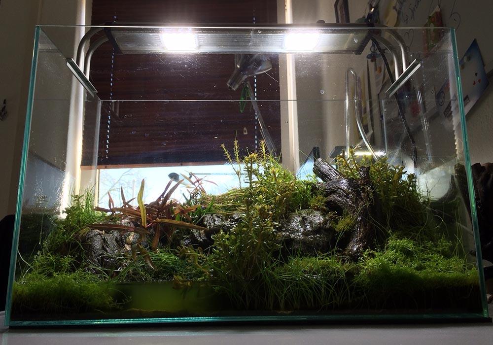 Wie Du milchig trübes Wasser im Aquarium effektiv entfernst! 2