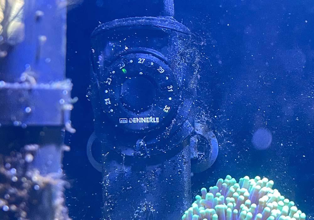 Wann ein Heizstab im Aquarium notwendig ist