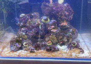 Kieselalgen in der Einfahrphase im Aquarium