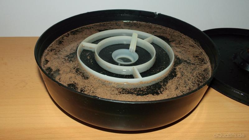 Artemia-Aufzuchtschale mit Eiern