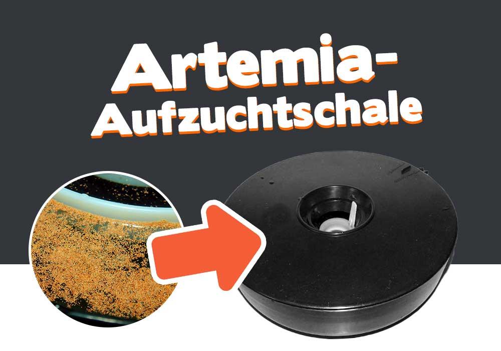 Die Artemia-Aufzuchtschale von Hobby 3