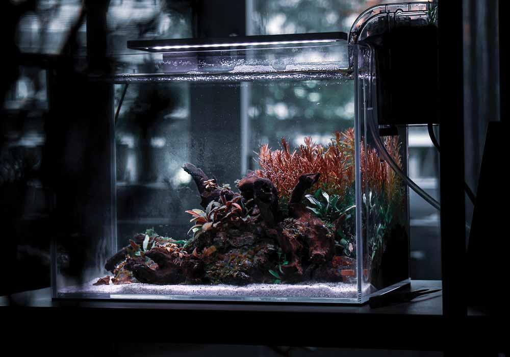 Wie bekommt man das Aquariumwasser weicher